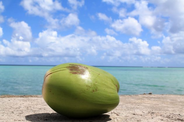 coconut 1179414 960 720