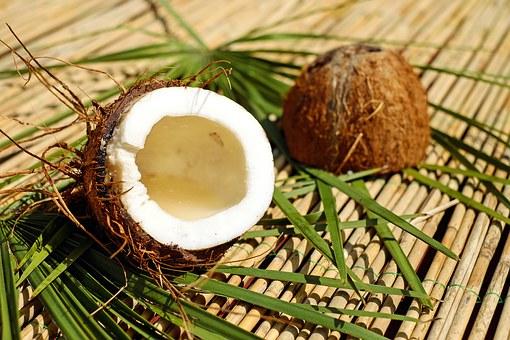 coconut-1501334__340