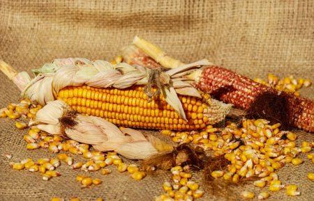 corn-1725636_640