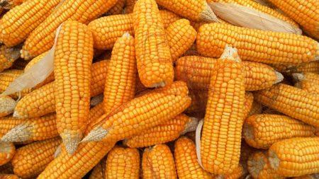 corn-1726017_640