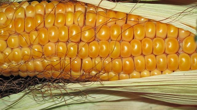 corn-190014_640