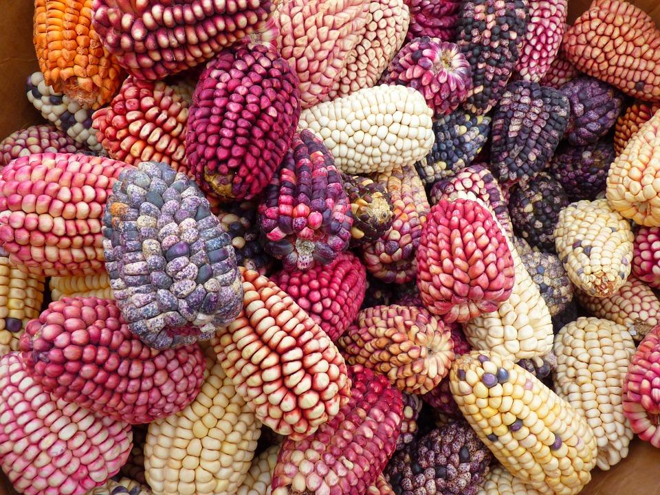 corn-43312_960_720