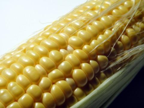 corn_004920