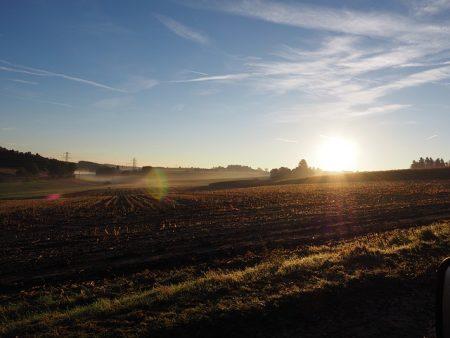 cornfield-503929_640