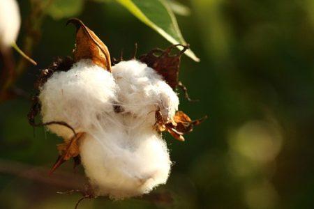 cotton-615103__340