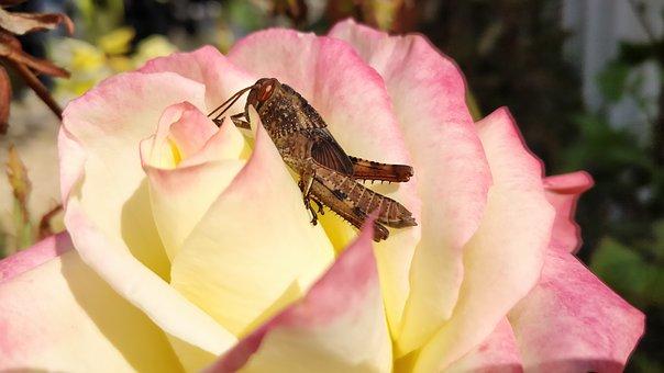 cricket flower 3980026  340