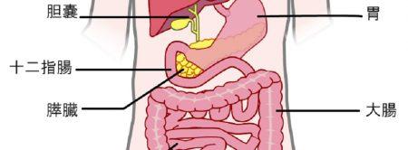膵臓位置2