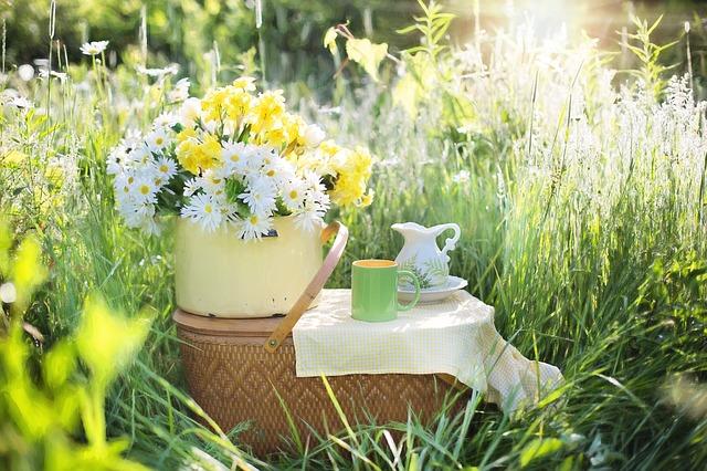daisies-1466851_640