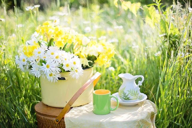 daisies-1466860_640