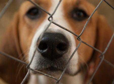 dog-1437540_640