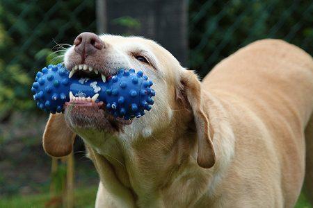 dog-167663_1280