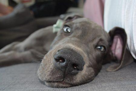 dog-2475633_640