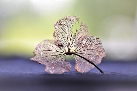 dry-flower-2541619_640