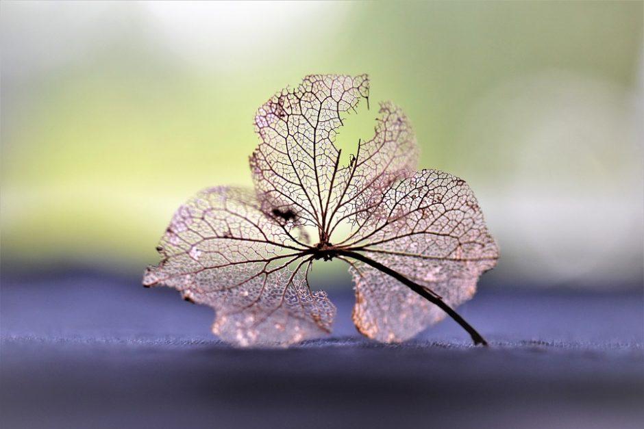 dry-flower-2541619_960_720