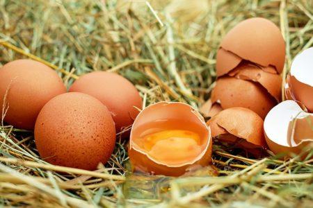 egg-1510449_640