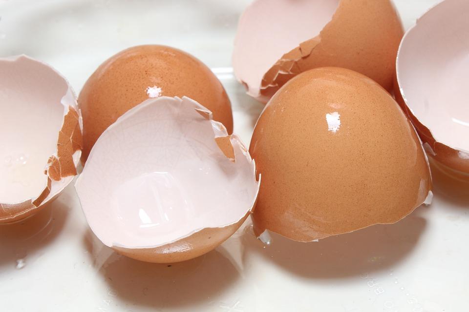 egg 3257472 960 720