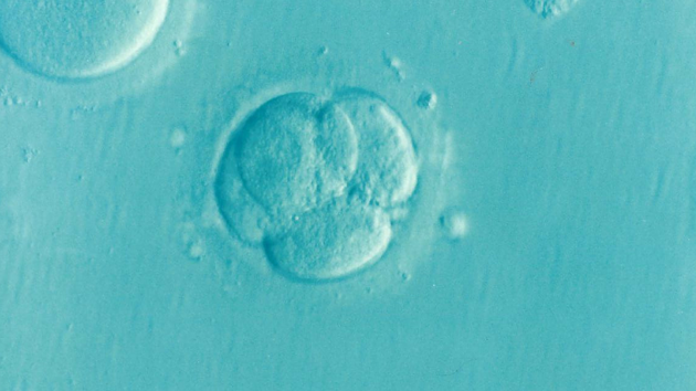 embryo 1514192 960 720