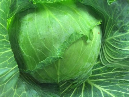 キャベツ_cabbage-1754889_640