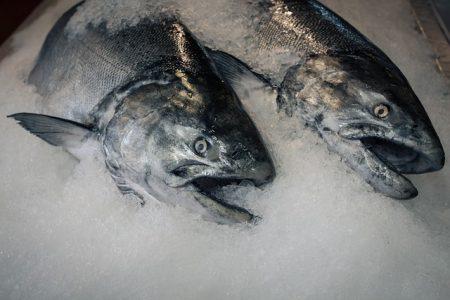 fish-2987487_640