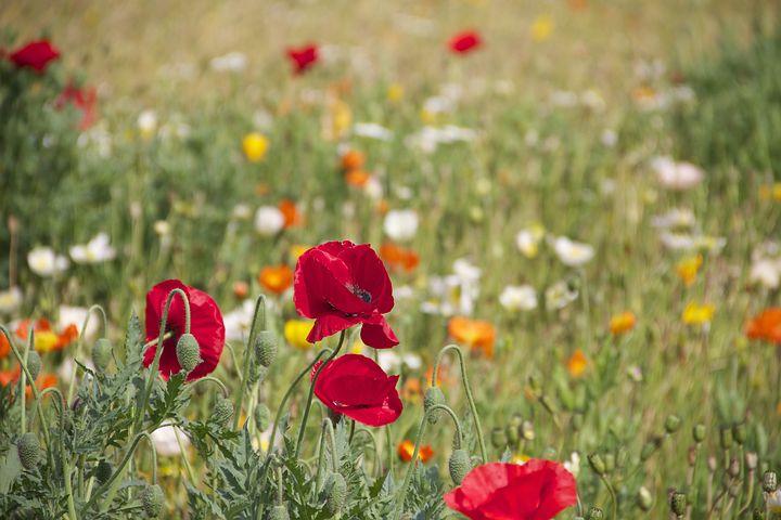floral-199099__480