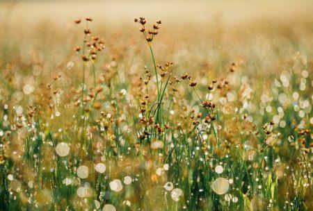 floral-865823_640