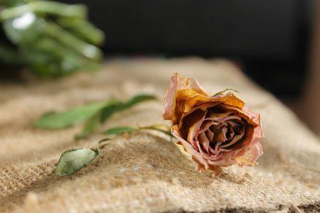 flower-1228762_640