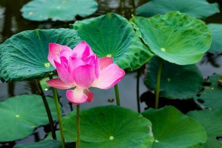 flower-1523341_640