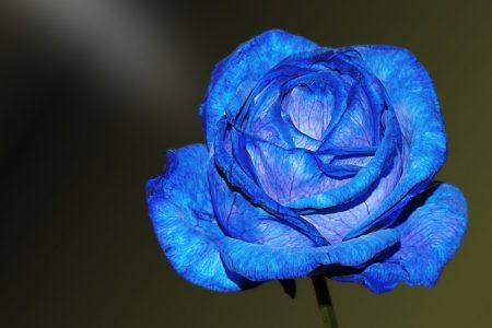 flower-1944535_640