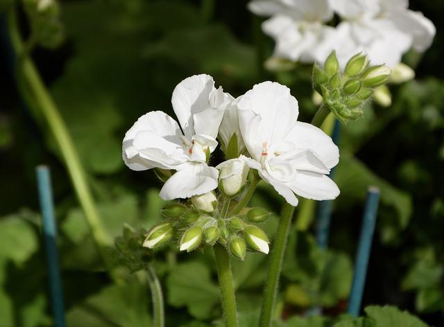 flower-3295711_640