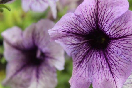 flower-3403851_640