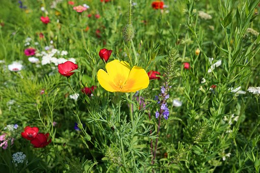 flower-meadow-2705261__340