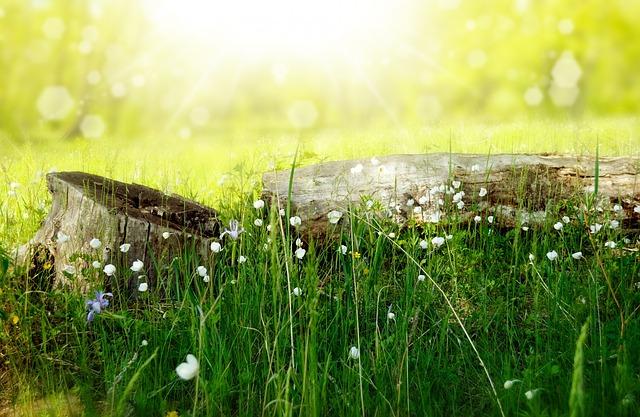 flowers-164754_640