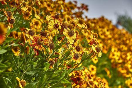 flowers-2825633_640