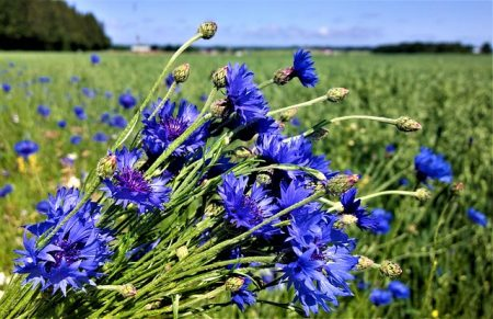 flowers-2943693_640