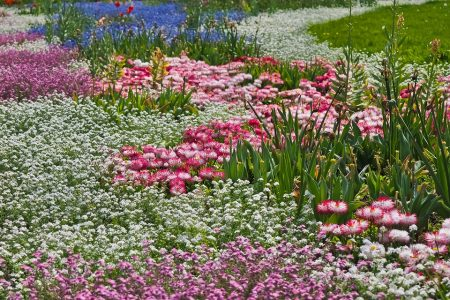 flowers-3383018_960_720