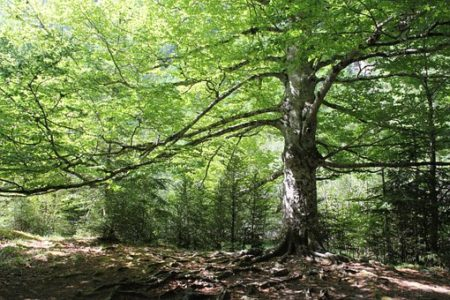 forest-951572__340