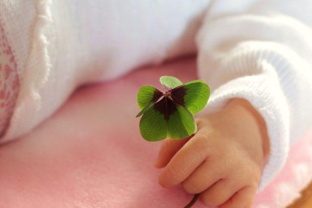 four leaf clover 1892660 640