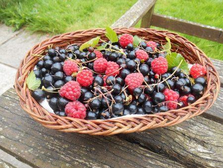 fruit-1593565_640