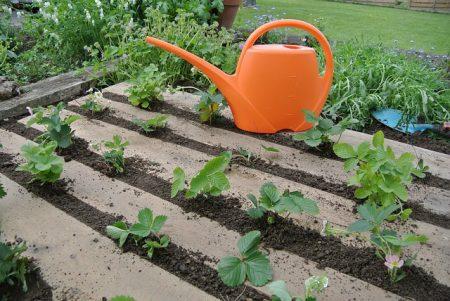 garden-934189_640