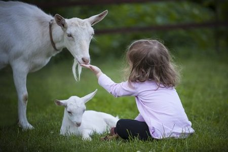 goat-3017394__340