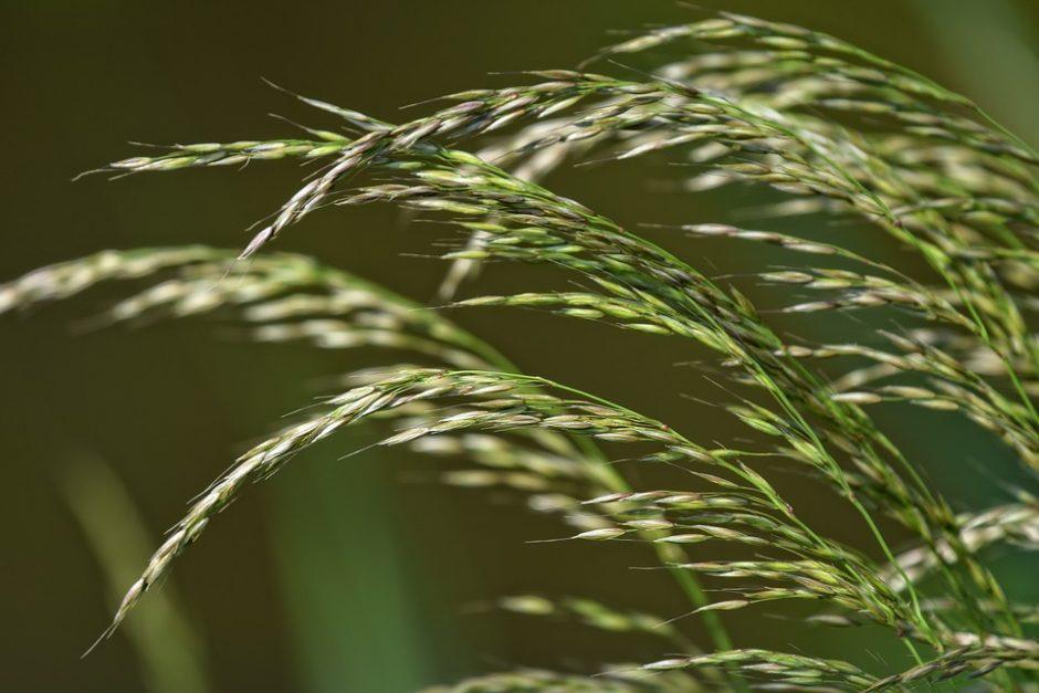 grass-3423186_960_720