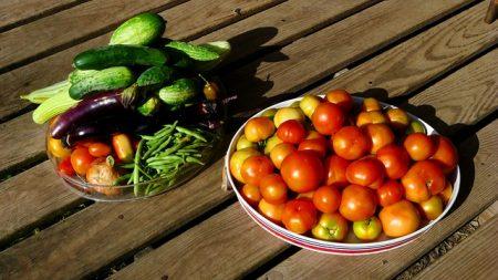 harvest-2882520_640
