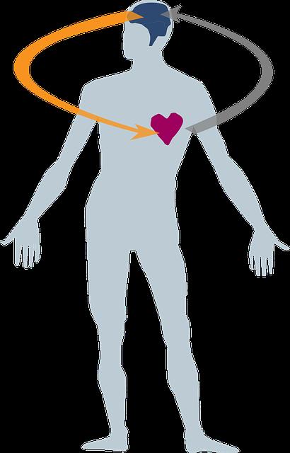 heart-2546039_640