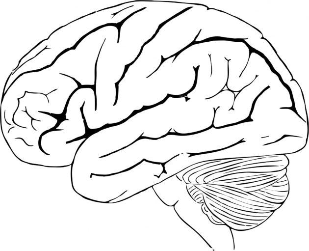 human-brain-1443447047y4R