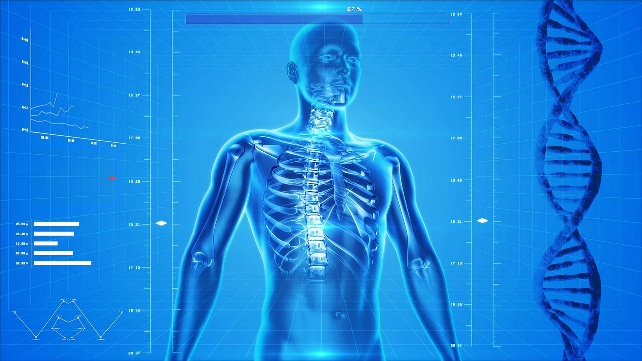human skeleton 163715 1280