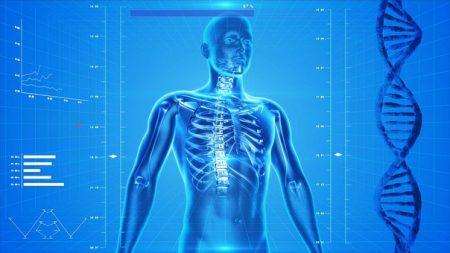 human-skeleton-163715__340