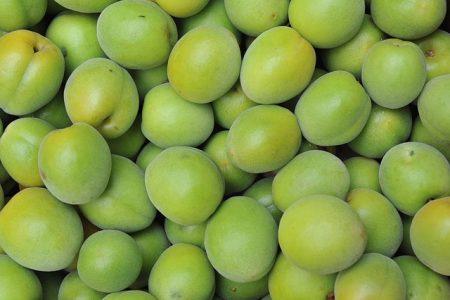japanese-apricot-71162_640