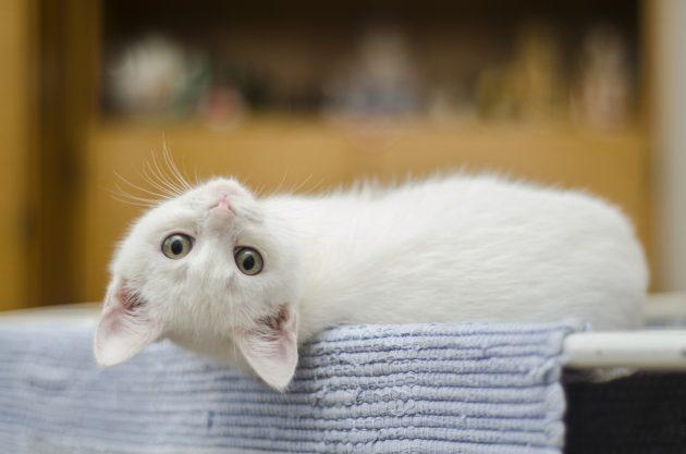 kitten 1285341 960 720