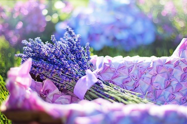 lavender 2482372 640