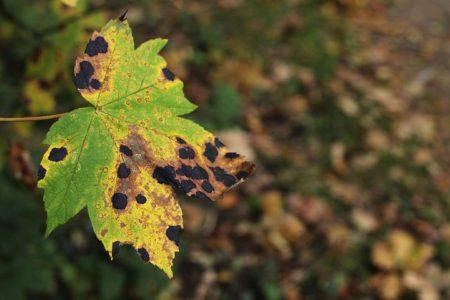 leaf-1745342__480